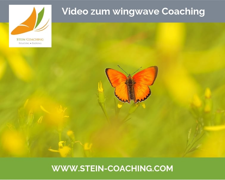 wingwave coaching video